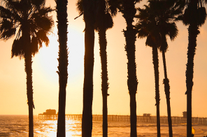 The Setting Sun Silhouettes The Pier and Palm Trees At Oceanside California